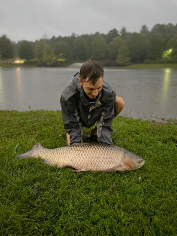 Catching Big Grass Carp