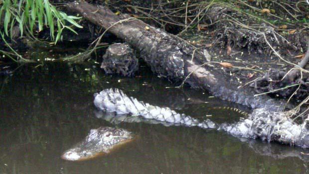 Camouflage Gator