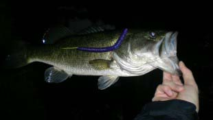 Night Largemouth Fishing