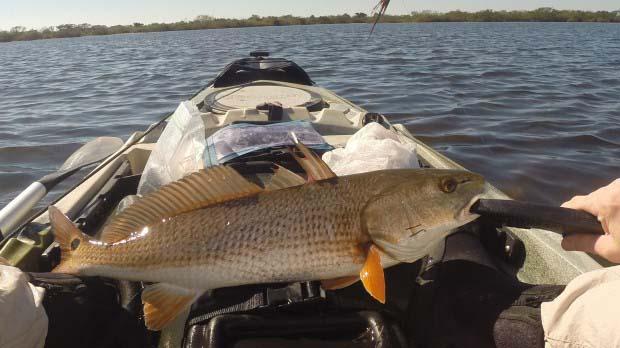 Redfish Fillet