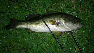 Night Bass Snapped Rod