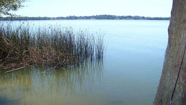 Lake with reeds for bass fishing
